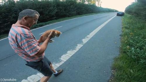 高速道路で子猫を救出05