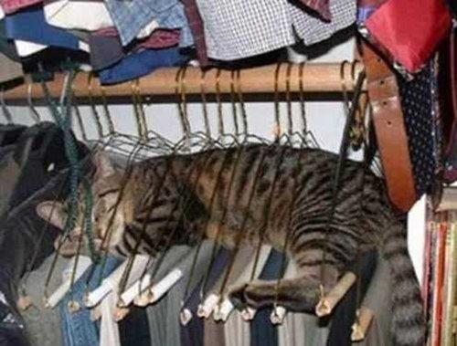 テトリス猫17