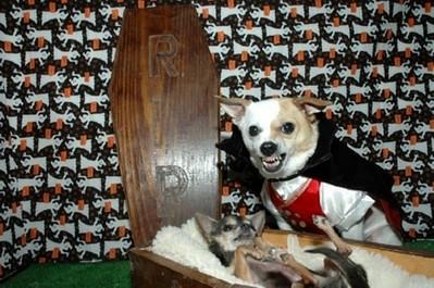 酷い犬のコスプレ12
