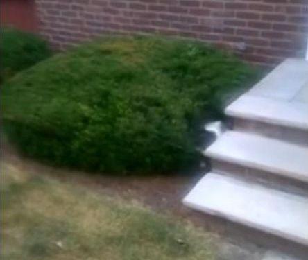 階段が怖い子犬…まさかの方法07