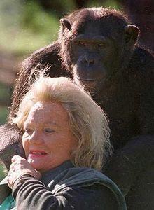 リッチなチンパンジー01