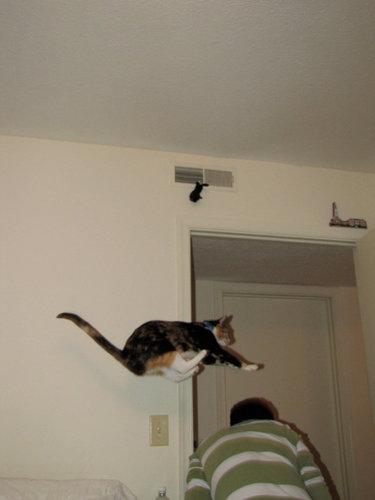 すごい猫12