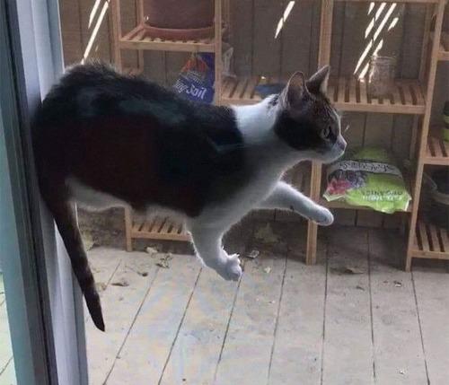 重力を無視する猫07
