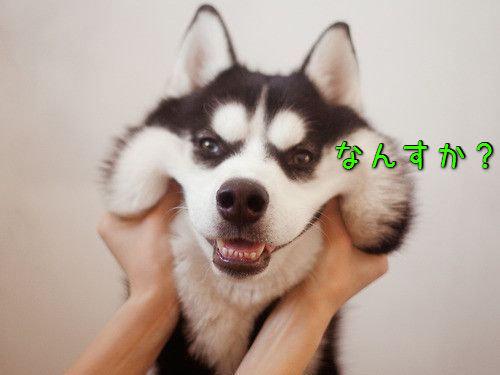 犬の表情00