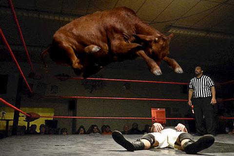 牛のジャンプ力を19