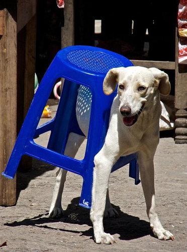 犬や猫の家具の使い方18