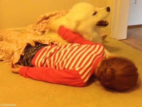 女の子とサモエドの子犬01