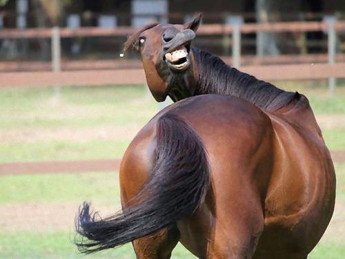 笑っちゃう動物10