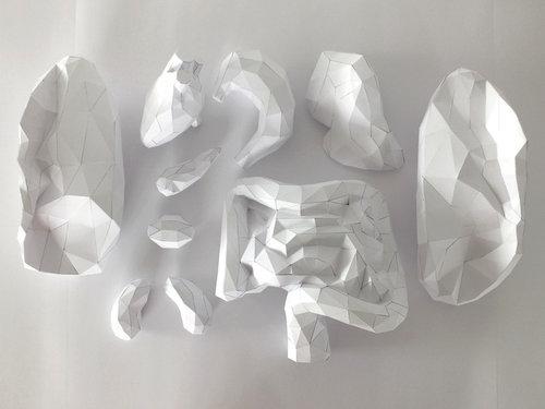 人体模型ペーパークラフト05