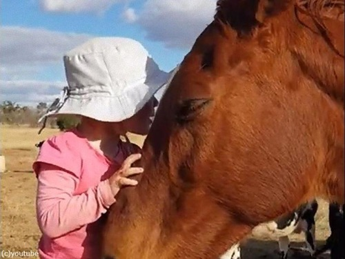 馬が3歳の女の子の歌にウットリ01