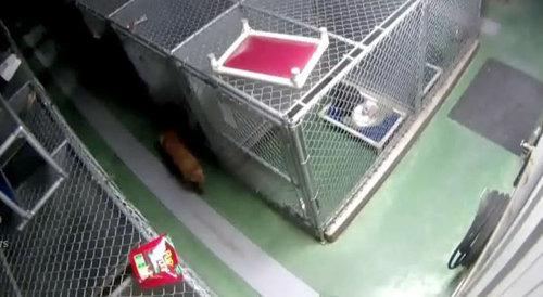 「ペットホテルから犬が脱走した理由」01
