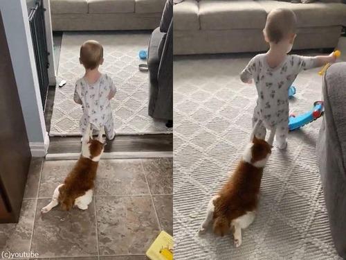 猫をお尻にぶら下げる赤ちゃん01