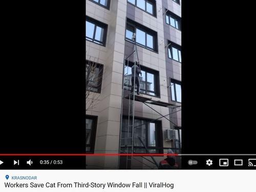 三階の窓から落ちそうな猫