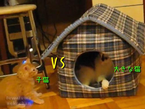 子猫の襲撃