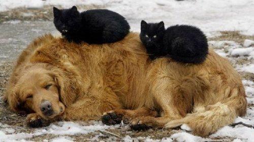 動物のベッド01