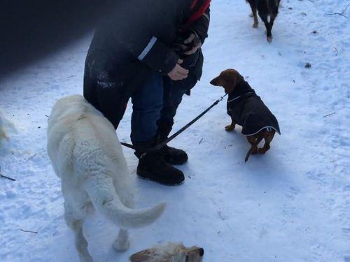 犬の散歩をする犬01