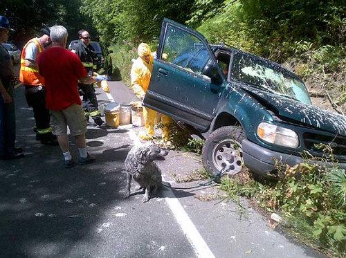 ペンキ缶を乗せた車が事故02