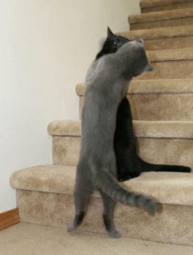 押し倒される猫16