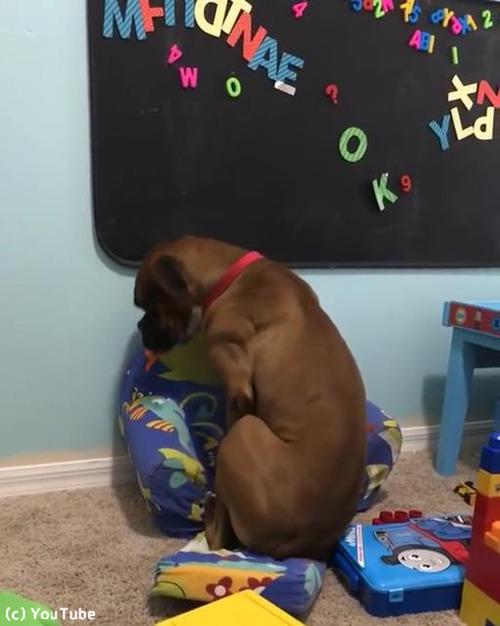 大型犬「どうしても座ってみたかった」02