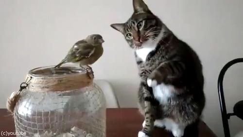 鳥を優しくさわる猫01