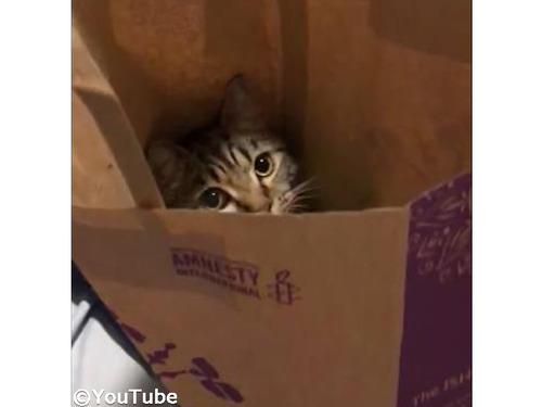 紙袋の中でリラックスする猫…喉を鳴らしてゴロゴロ00