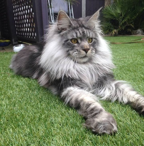 前世は別の動物だったであろう猫02