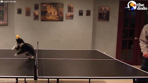 卓球ねこ02