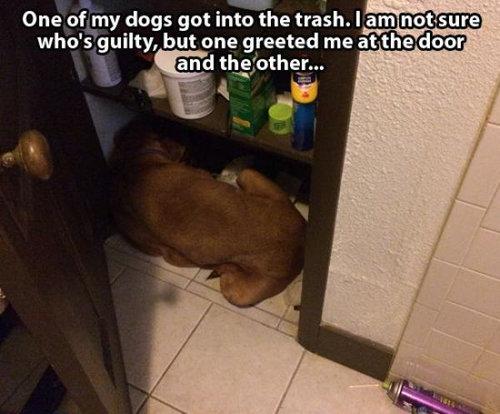 悪さをした犬たち14