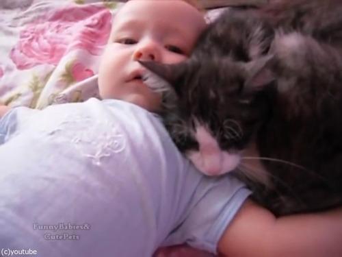 赤ちゃんをあやす猫06