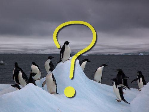 ペンギンウォーズ00