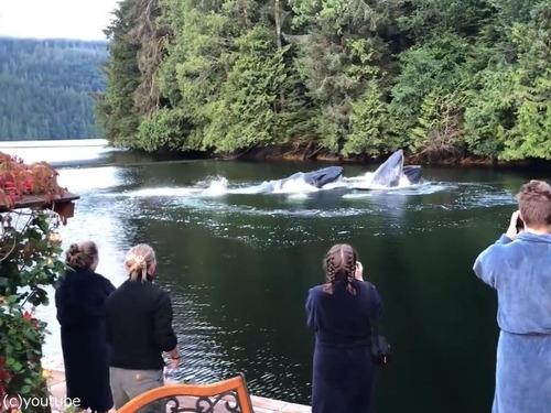 ロッジの前にクジラが姿を現す02