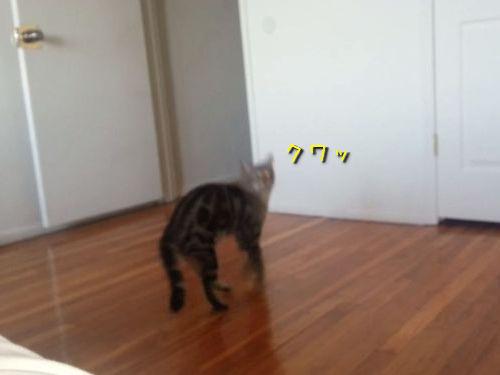 2足歩行の猫01