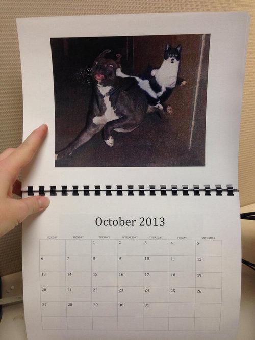 猫のカレンダー10
