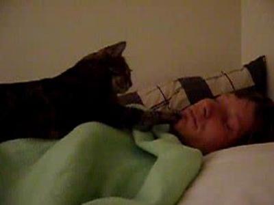猫目ざまし