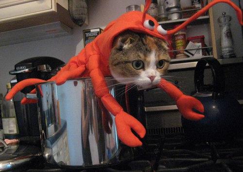 前世は別の動物だったであろう猫13