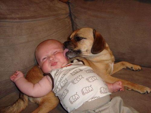 ペットと赤ちゃん10