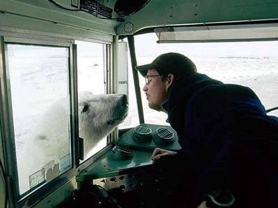 北極で落ちた恋