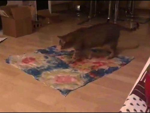 不思議な猫の行動00