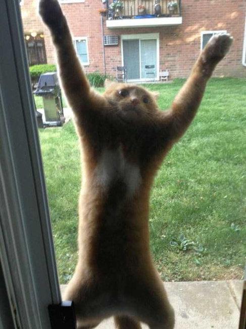 猫の謎の行動21