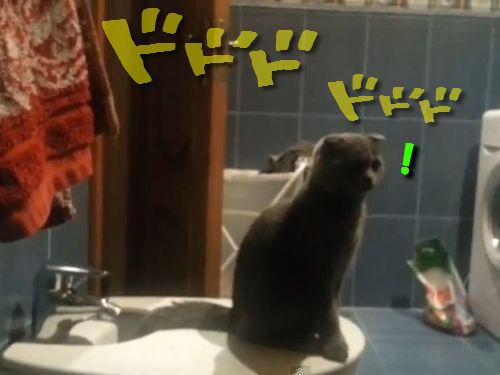 ドドドを聞いて立つ猫