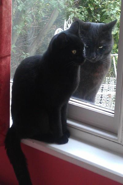 猫の鏡01