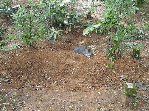 飼い主の墓に1年も居座り続ける猫02