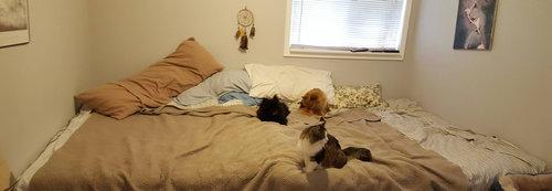 5匹の猫と2匹の犬05