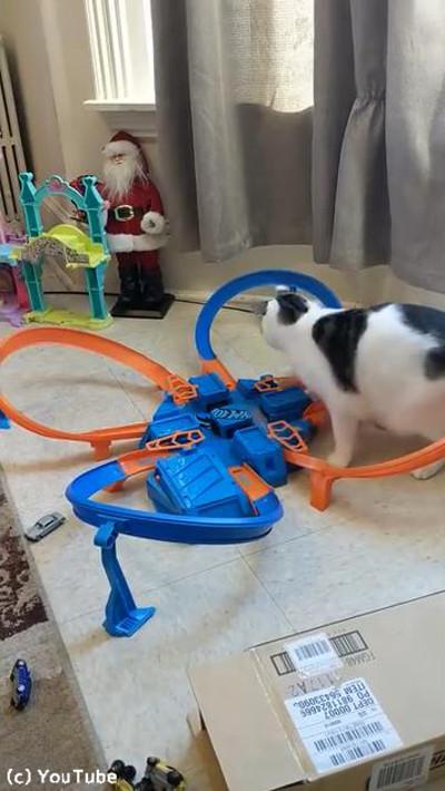 おもちゃに夢中な猫03