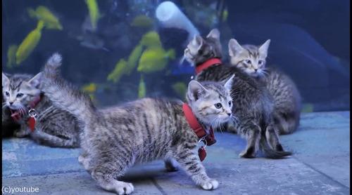 ジョージア水族館を訪れた子猫たち02