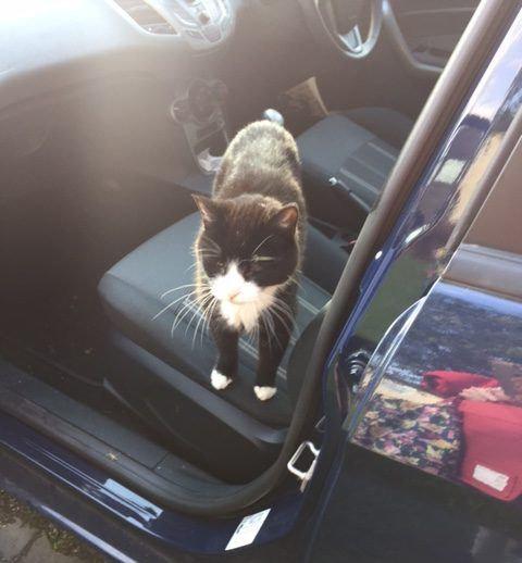 帰宅したら…見知らぬ猫がいる11
