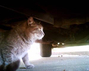 ネコ視点ではこう見える!ネコにカメラをつけて撮影04