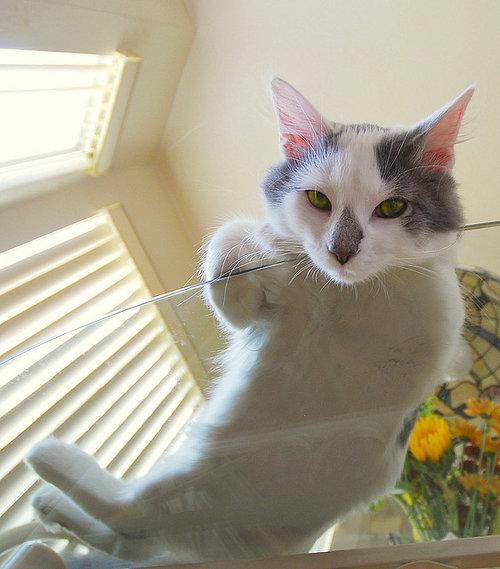 ガラスの上の猫06