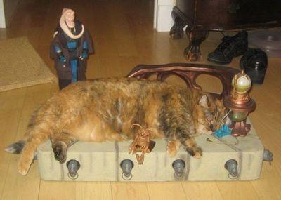 猫スターウォーズ02