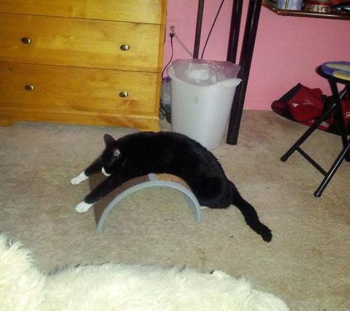 「猫あるある」17